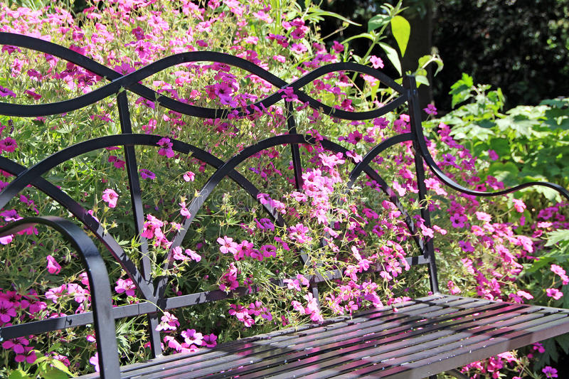 Wild flowers and garden bench. Photo of pretty wild flowers growing through a garden bench stock photos