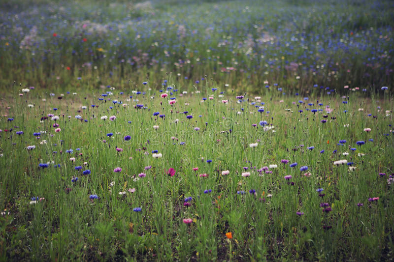 Wild Flowers growing in a Field royalty free stock photos