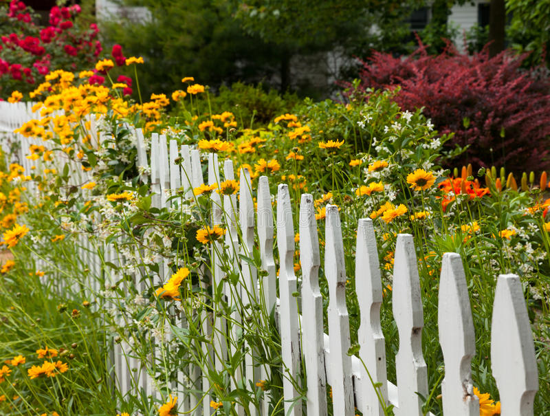 Download Wild Flowers Growing Over White Picket Fence Stock Photo - Image: 25023758