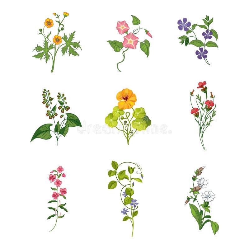 Wild Flowers Hand Drawn Set Of Detailed Illustrations vector illustration