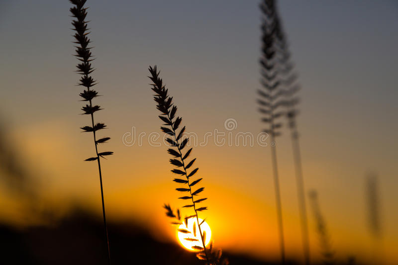 Wild flowers , herbs against a sunset, natural background. Wild flowers - perennial grass , herbs against a dramatic sunset, natural background. Bright orange royalty free stock images