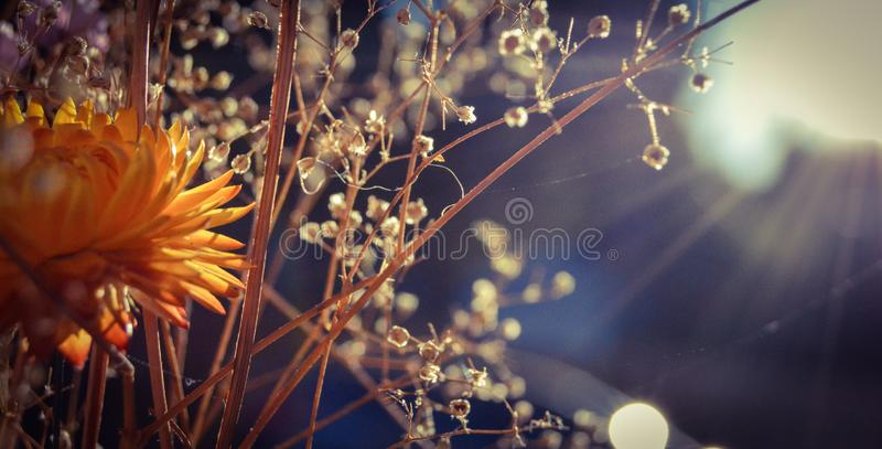 Wild flowers and are hit by the soft evening sun.  royalty free stock photo