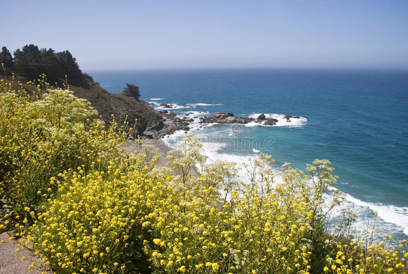 Download Wild flowers on Hwy 1 stock photo. Image of roadside - 12908304