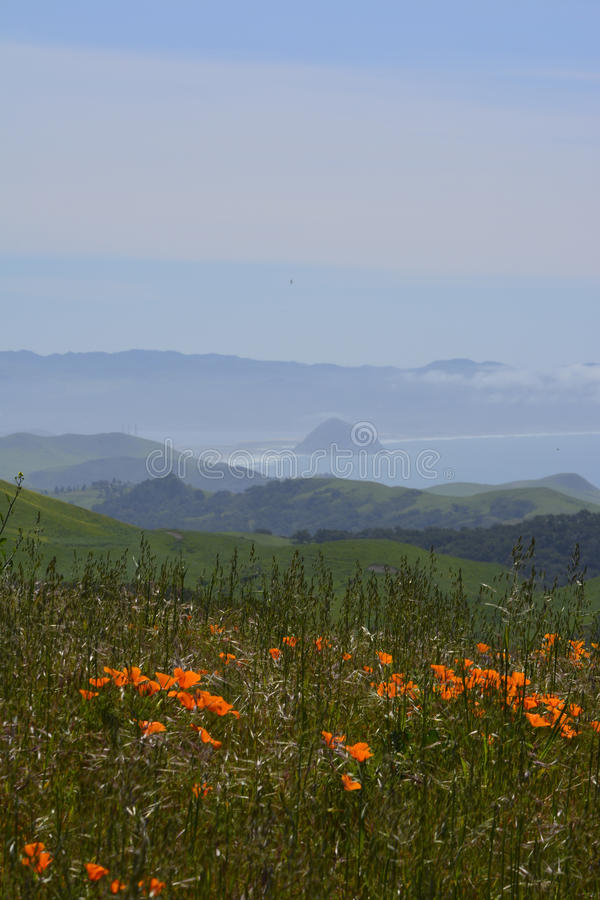 Wild Flowers HWY 46W Morro Rock View stock photography