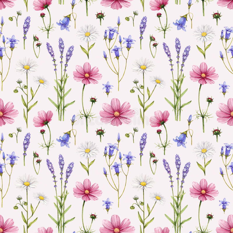 Free Wild Flowers Illustration Stock Photo - 38384890