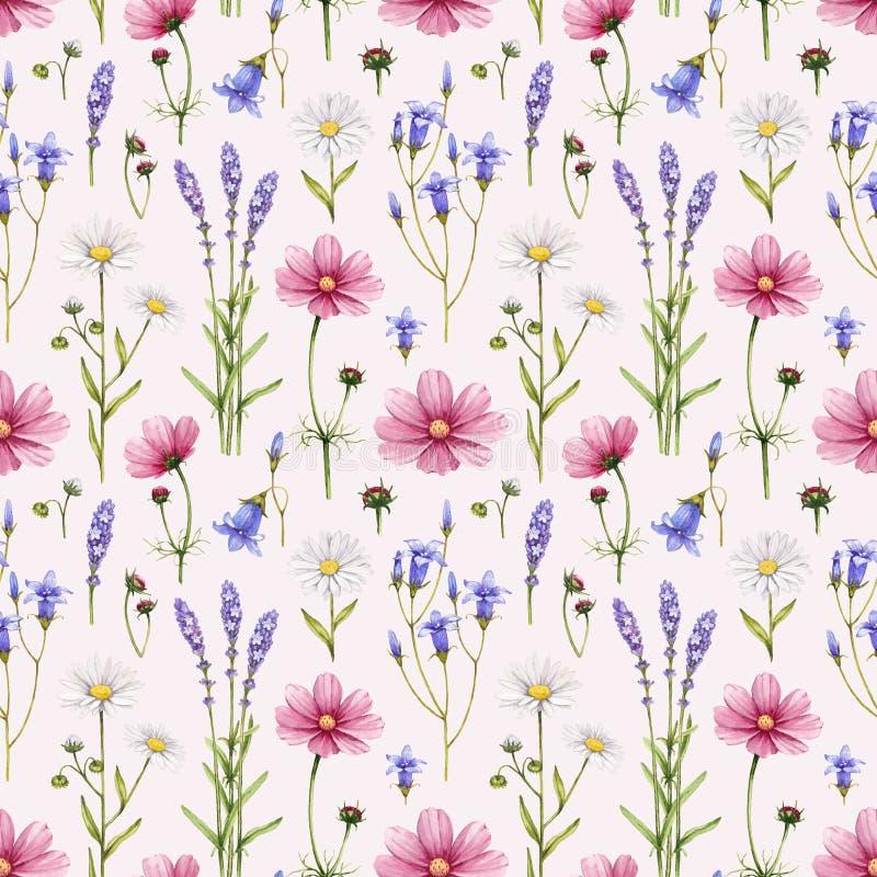 Wild flowers illustration stock illustration