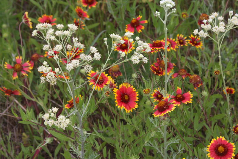 Download Wild flowers stock photo. Image of wild, stems, stilllife - 94482266