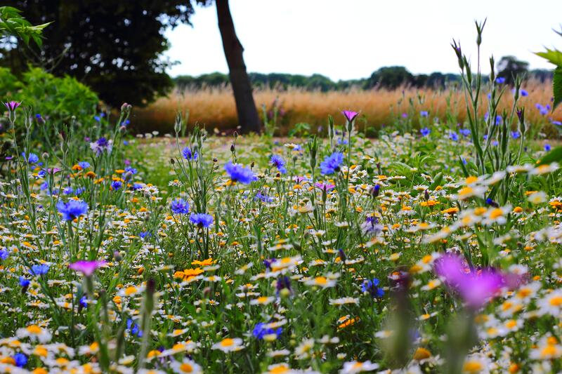 Wild flowers including daisies and corn flowers stock images