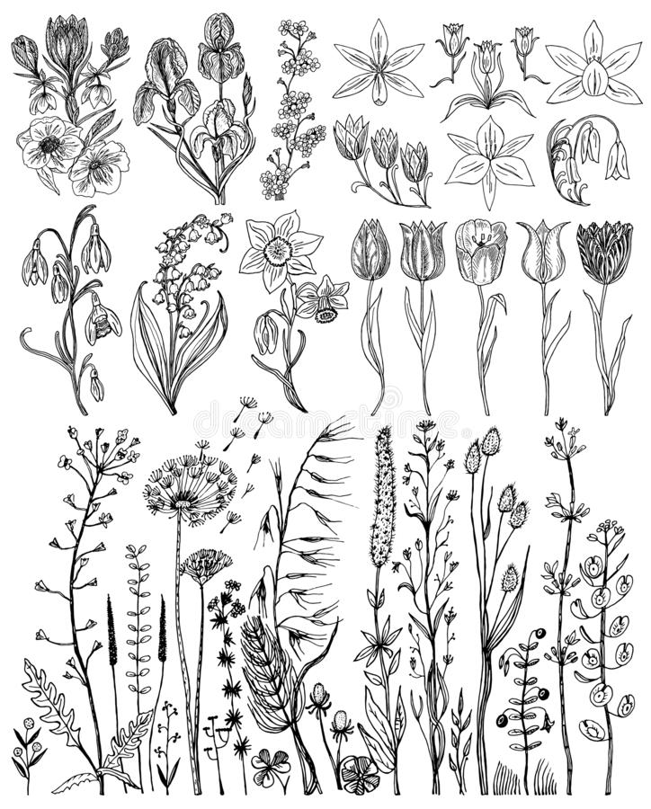 Wild Flowers with leaves. Set of Wedding botanical plant with leaf and buds. Botanical organic spring herb. Engraved stock illustration