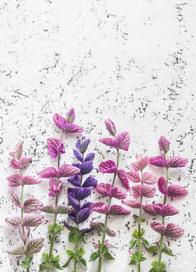 Wild flowers light background. Free space for text, top view. royalty free stock images