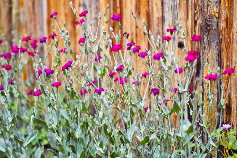 Wild flowers magenta stock photography