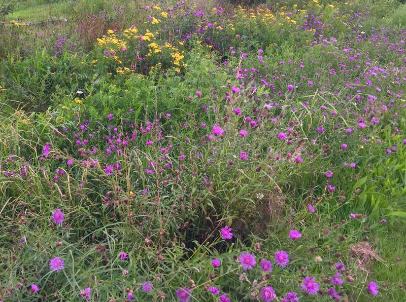 Wild flowers in the meadow stock images