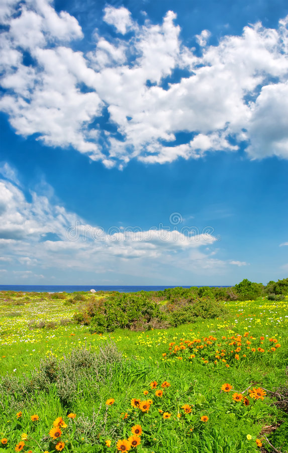 Wild flowers next to sea under dramatic skies stock photo