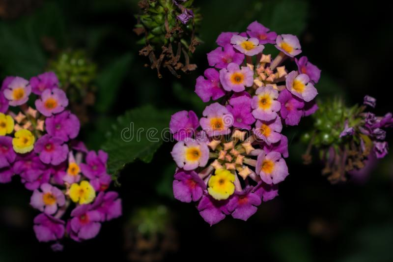 Wild flowers at night royalty free stock images