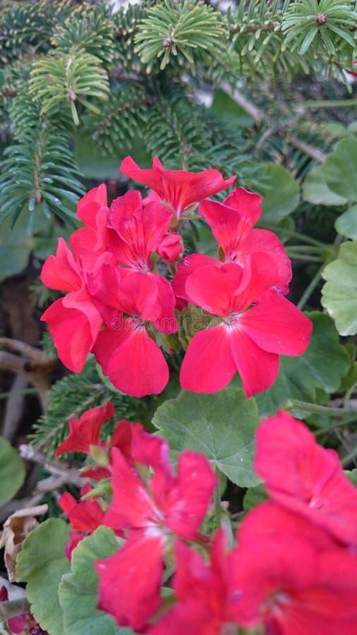Wild flowers stock photo