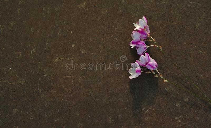 Wild flowers on plain tombstone. Wild purple white flowers on plain dark brown tombstone with plenty copy space for your message royalty free stock photo