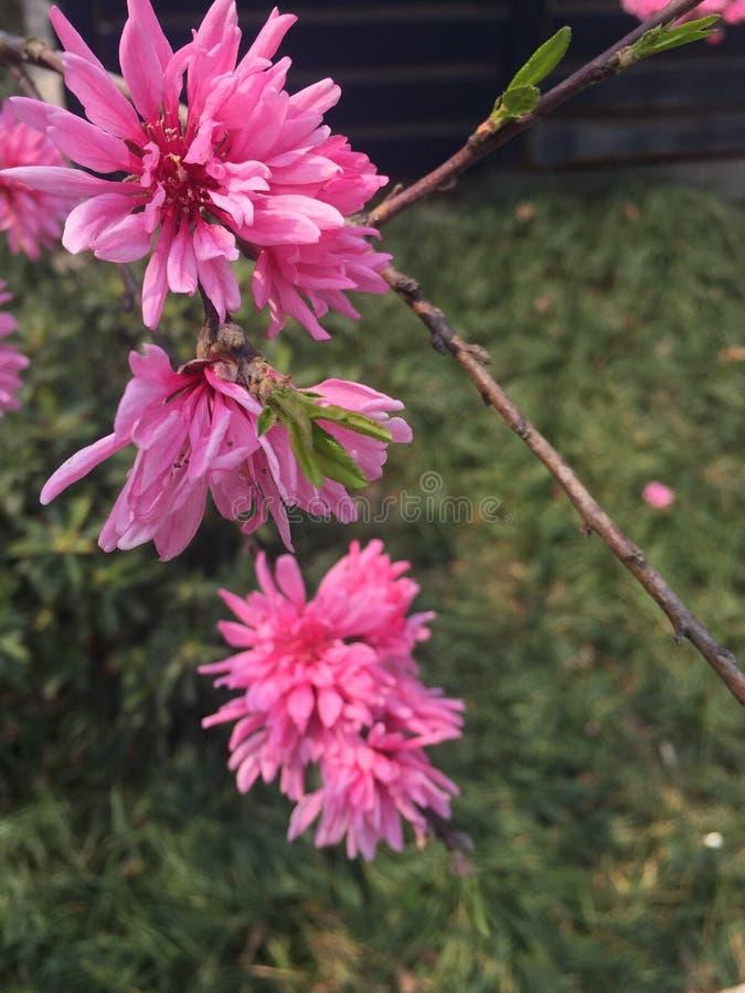 Wild flowers royalty free stock photos