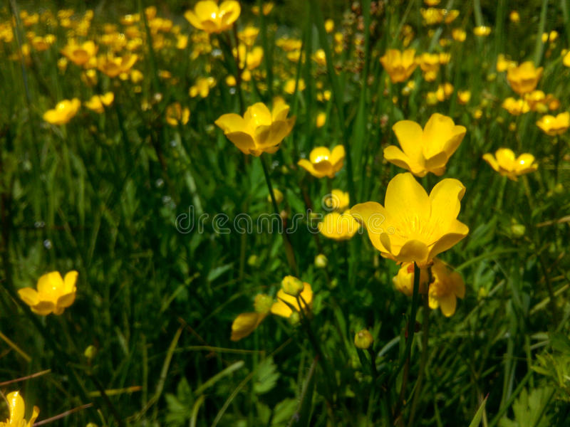 Wild flowers. Spring flowers that enchant its beauty and uniqueness. Photo of the original natural light provides a spring mood can be used as a background in stock photos