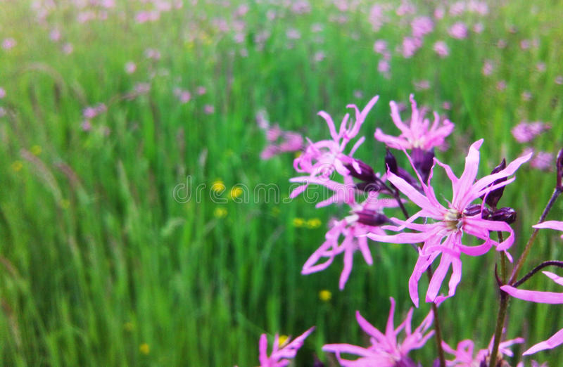 Wild flowers. Spring flowers that enchant its beauty and uniqueness. Photo of the original natural light provides a spring mood can be used as a background in stock photography