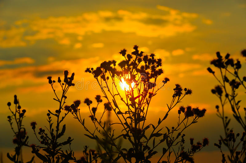 Download Wild Flowers On Sunset Background Stock Image - Image: 42172139