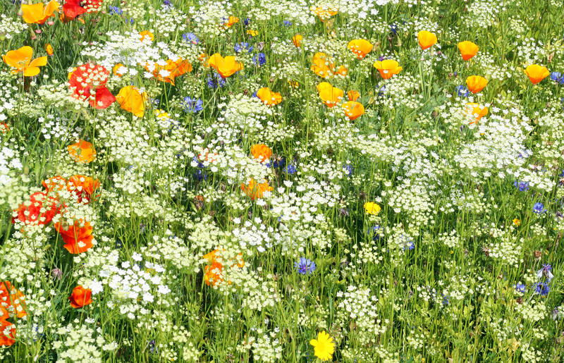 Wild flowers white and yellow. stock images