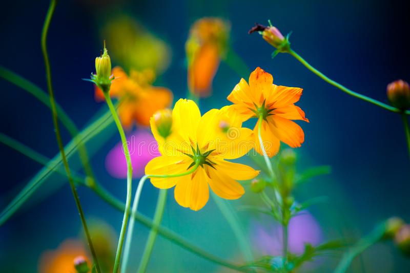 Wild Flowers in Yangshuo China stock photography