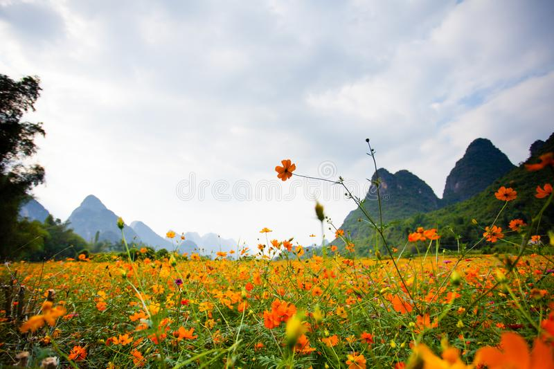 Wild Flowers in Yangshuo China stock photography