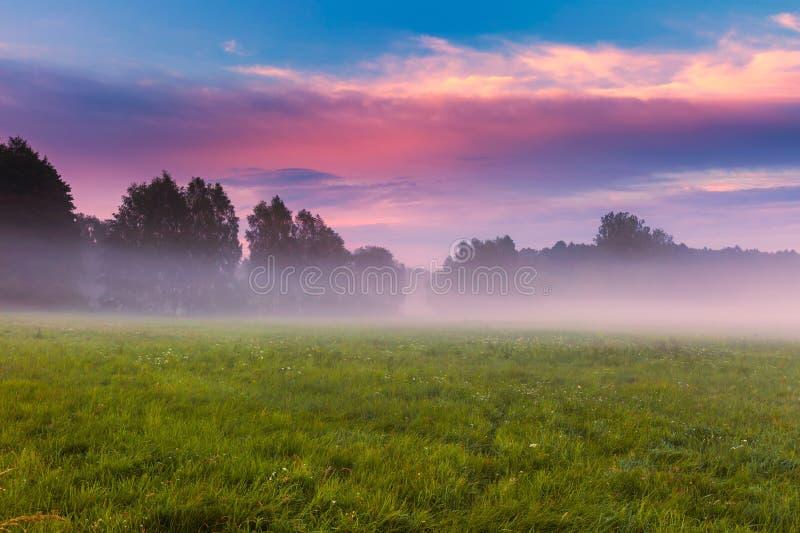Wild foggy meadow landscape. Summer grassland under sunset or sunrise sky and fog. Misty landscape stock photo