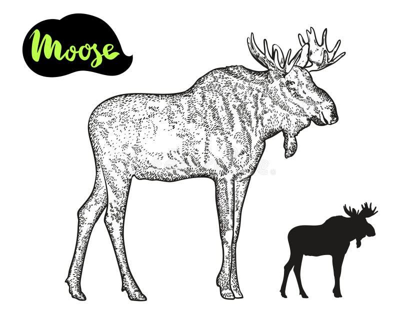 Moose vector hand drawn illustration. vector illustration