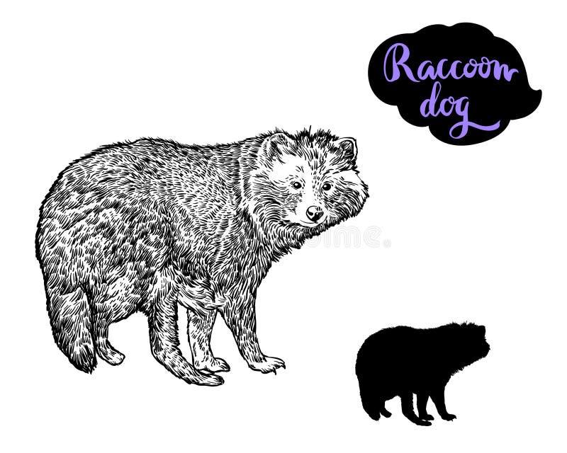 Raccoon dog vector hand drawn the illustration. stock illustration
