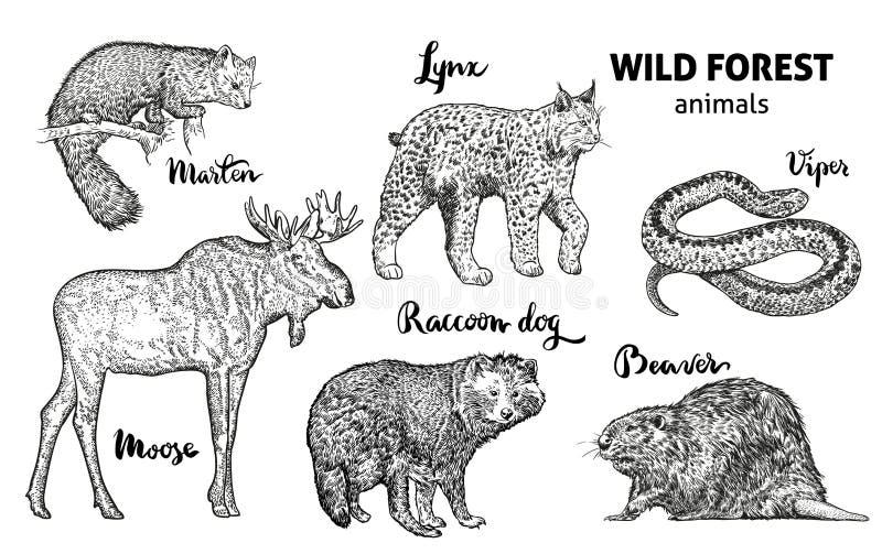 Wild forest animals set. Moose, marten, lynx, raccoon dog, beaver, viper vector stock illustration