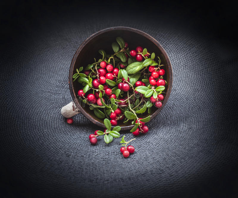 Wild forest cowberry with leaves spilled from round clay pipkin dish on dark black corners background. Front. Wild red forest cow-berry lingonberry with leaves royalty free stock image