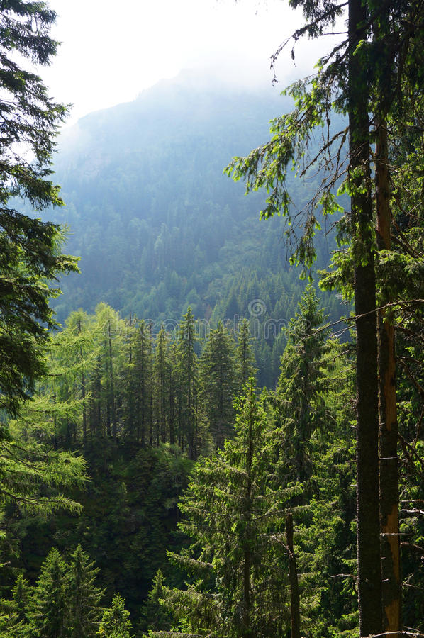 Free Wild Forest In The Romania Stock Image - 52377121