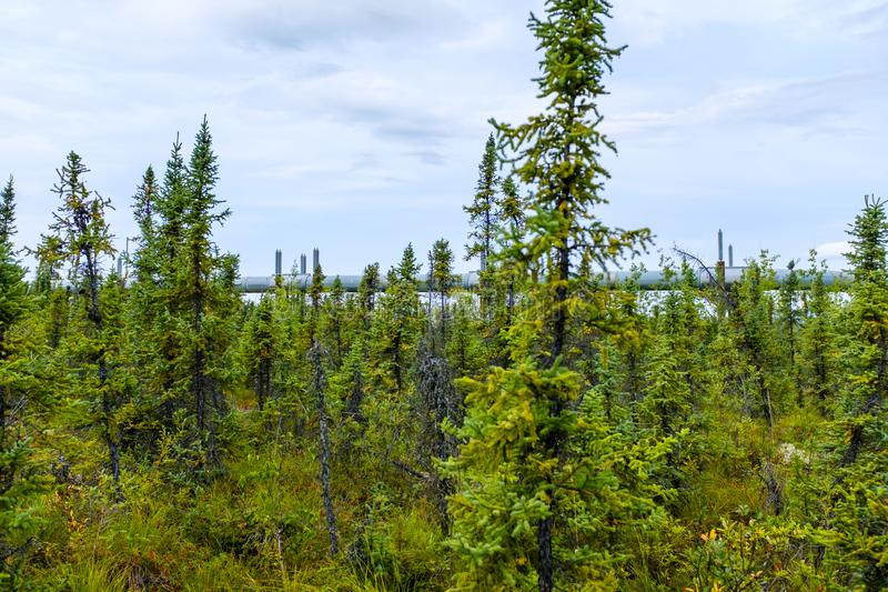 Wild forest in interior Alaska next to the pipeline royalty free stock photos