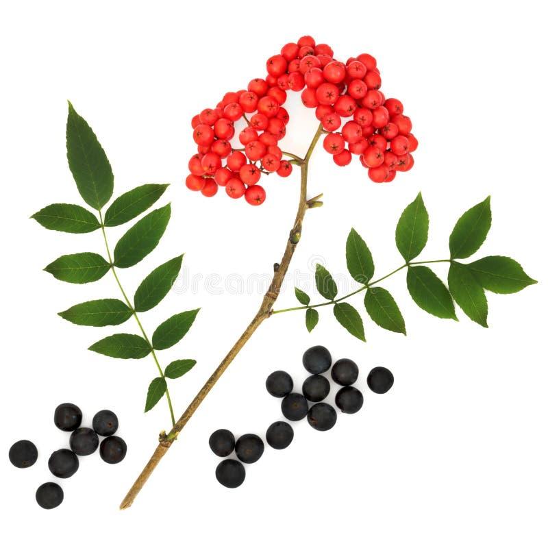Wild Fruit van de Herfst stock foto's
