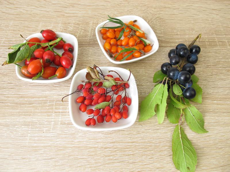 Wild fruits in autumn with sloe fruits, barberries, sea buckthorn fruits and rose hips stock photography