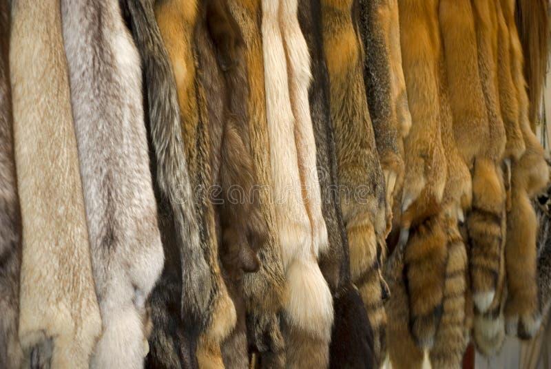 Wild Fur. Row of wild animal fur pelts royalty free stock photos