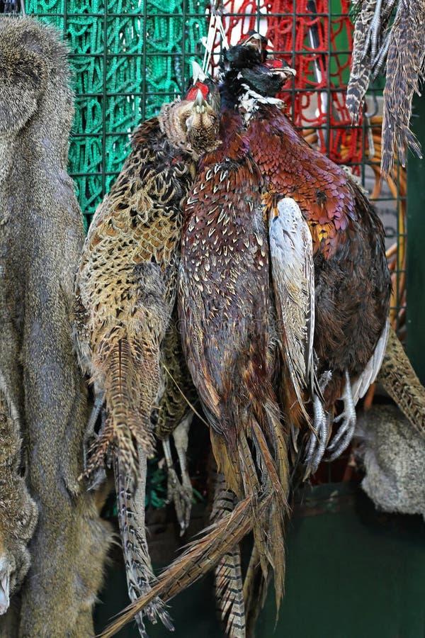 Download Wild game stock image. Image of bunch, pheasant, hanging - 27580537