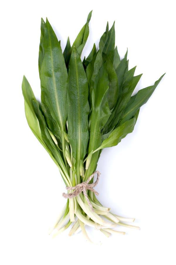 Wild garlic stock images