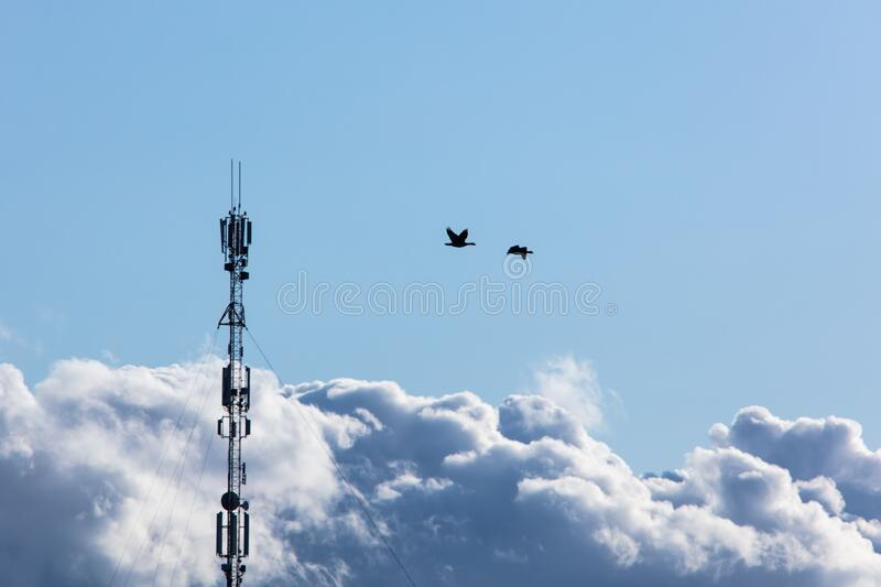 Wild geese in the sky royalty free stock photo