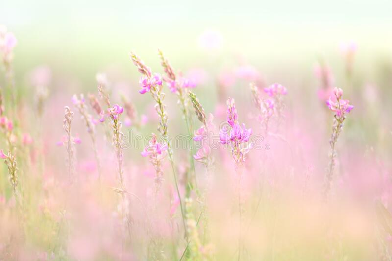 Wild gentle small flowers - natural meadow floral background royalty free stock photo