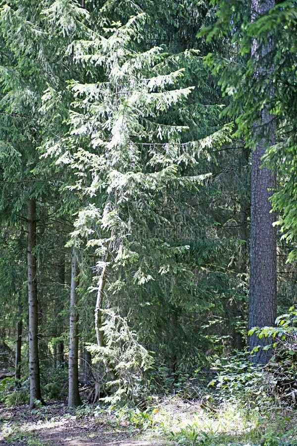 Wild German forest background best quality royalty free stock photos