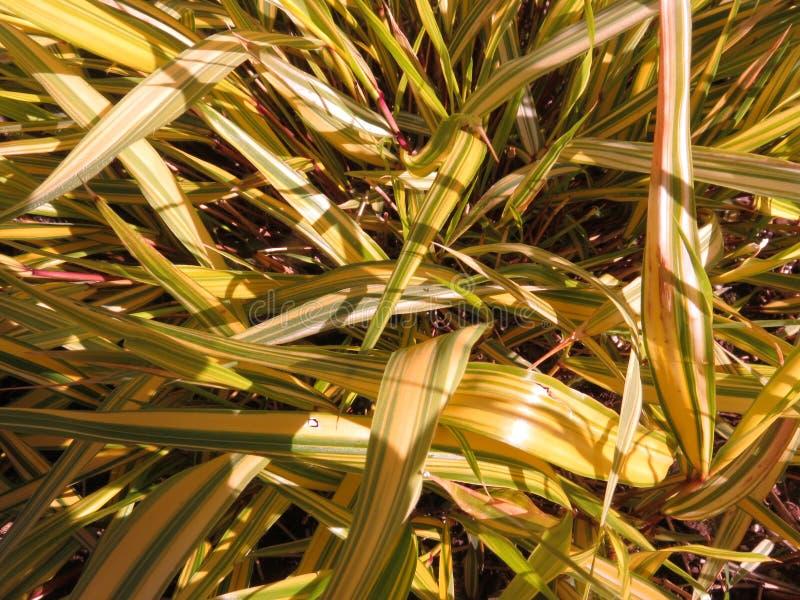 Wild Gras in de Tuin royalty-vrije stock afbeeldingen