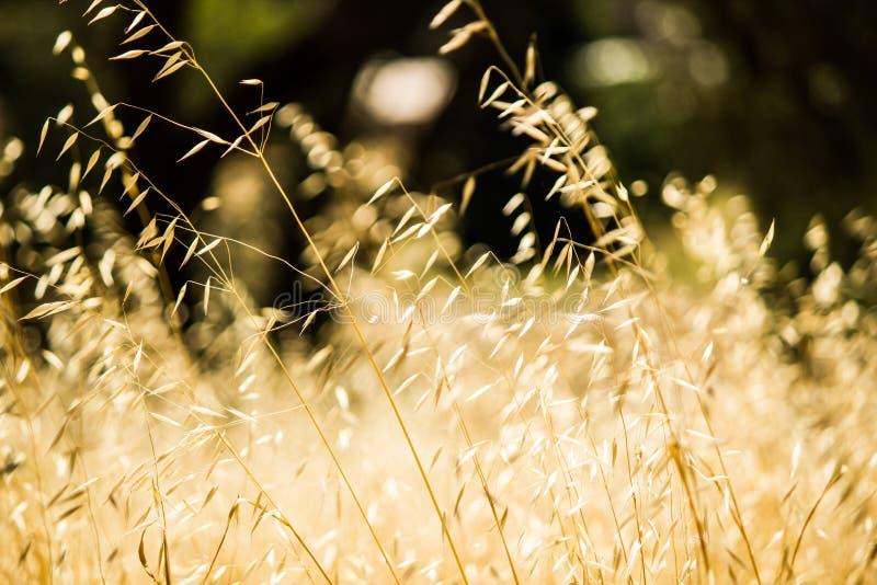 Wild gras die in de wind worden geblazen royalty-vrije stock foto's