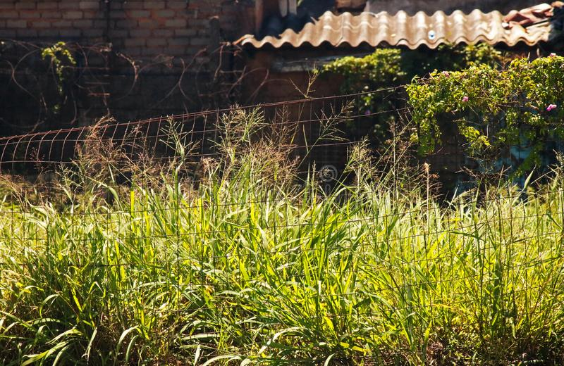 WILD GRAS DIE GEBOUW VAN VERLATEN INDUSTRIËLE PLAATS OVERNEMEN stock afbeeldingen