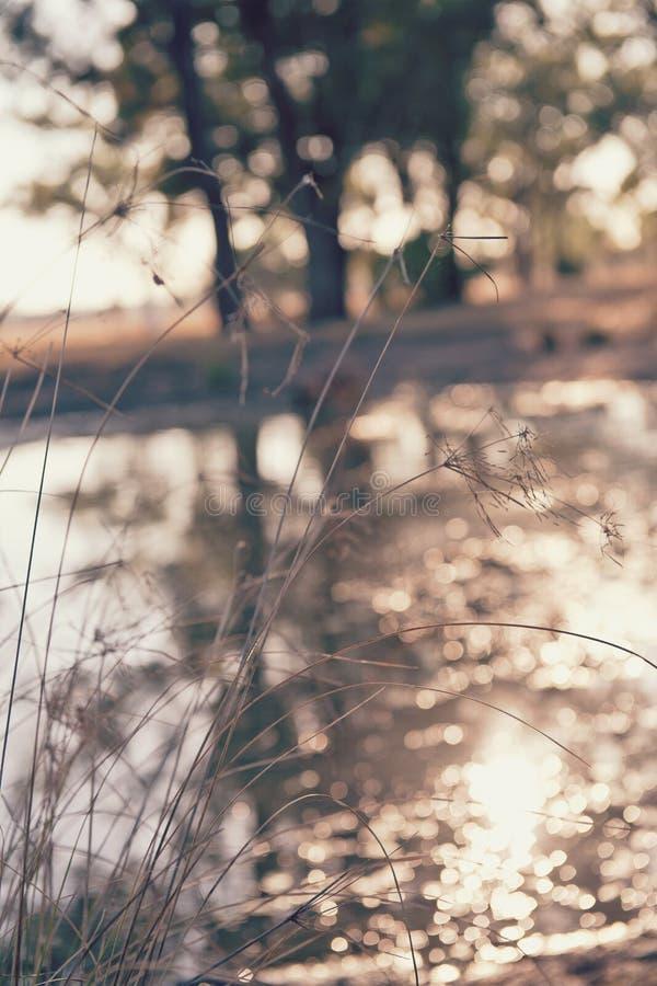Wild gras door een dam royalty-vrije stock afbeeldingen