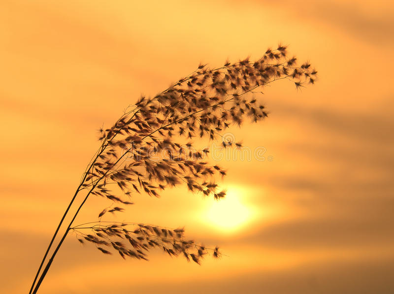 Wild grass stock photography