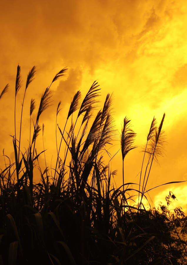 Free Wild Grass Stock Photo - 21563530