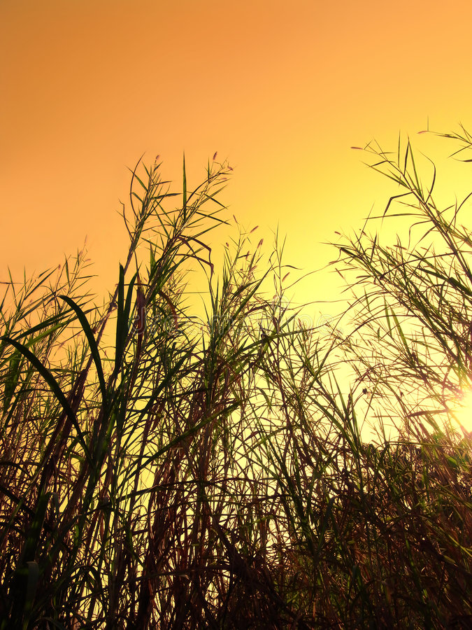 Free Wild Grass Royalty Free Stock Images - 8377799