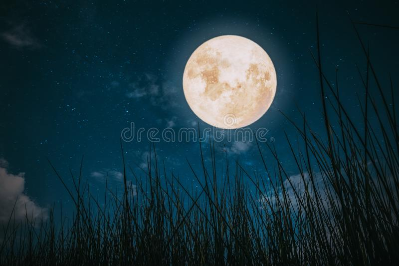 Wild grass in fall season and full moon with star royalty free stock images